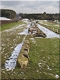 NZ1366 : Hadrian's Wall by Mike Quinn