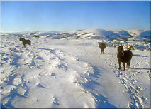 SO2455 : Ponies on the Hergest Ridge - 2 by Trevor Rickard