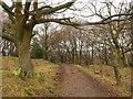 SO5312 : Wysis Way near Beaulieu Farm by Derek Harper