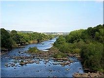 NZ1164 : River Tyne below Wylam Bridge by Andrew Curtis