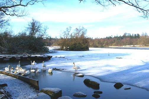 Winter at Bolam
