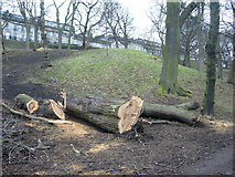 NT2674 : Diseased trees in London Road Gardens by kim traynor