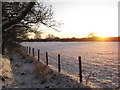 NY3858 : Sunset at Kingmoor Woods by Andy Connor