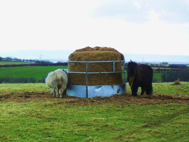 Feeding time at Alcrossagh