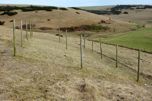 Vegetation investigations, Castle Hill National Nature Reserve