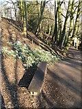 SE2768 : Woodland path by Jonathan Wilkins