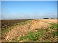 TF5706 : Fenland fields west of Crabb's Abbey Farm by Evelyn Simak