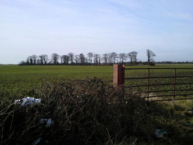 Field and Copse, Co Dublin