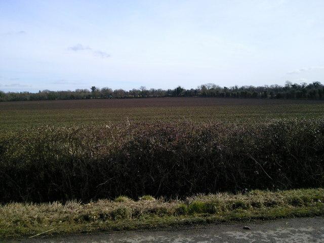 Rural landscape, Ratoath Manor, Co Meath