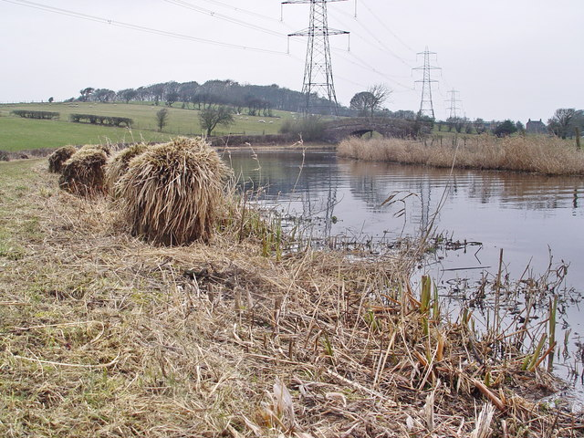 Tussocks By Lancaster Canal