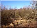 NS4669 : Rashielee Plantation by wfmillar