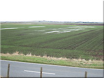 TL4176 : A paddy field in The Fens ? by Richard Humphrey