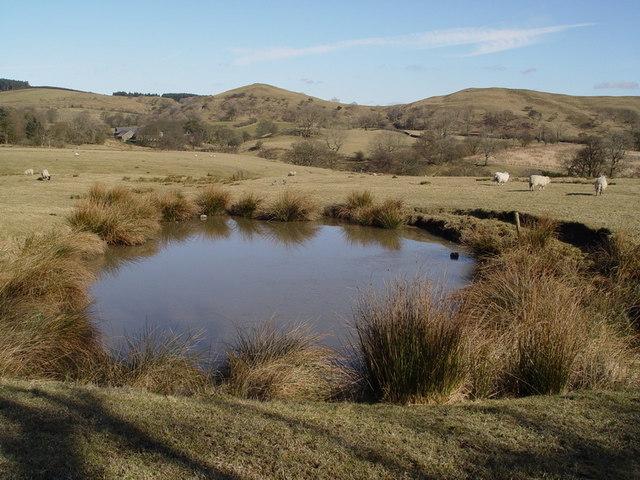 Pond Near Dinkling Green