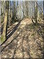 TQ8931 : Steps in Ratsbury Wood by David Anstiss