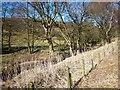 NZ6206 : Baysdale Beck by Philip Barker