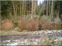 NS5379 : Uprooted trees by Mark Nightingale