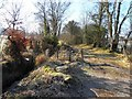 H1694 : Frosty lane, Edenmore by Kenneth  Allen