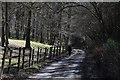 SU6884 : Lane through a Chiltern beech wood by Allan Rostron