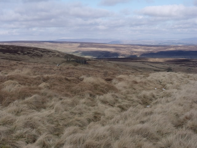 Towards Top Withins.