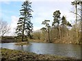 NZ0887 : Lake east of Longwitton Dene by Andrew Curtis