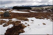 NN5961 : Boulder and Forest, Aulich Burn, Loch Rannoch by David G Campbell