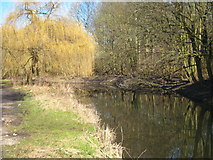 TQ0481 : Willow tree beside the River Frays by Rod Allday