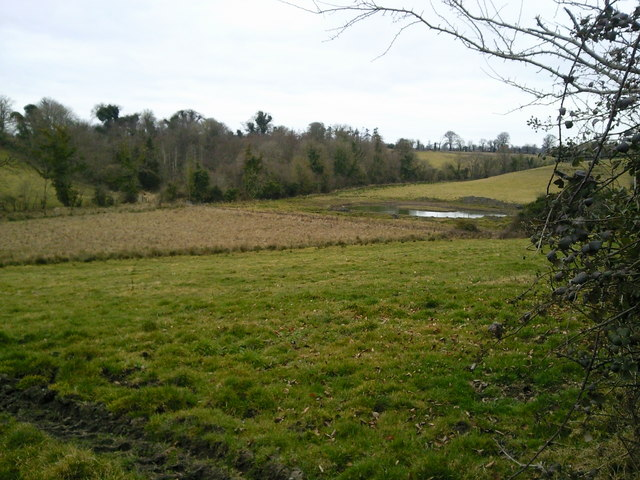Boggy Ground, Oberstown, Co Meath
