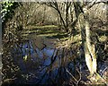 SX0754 : Wet woodland, River Par valley by Derek Harper