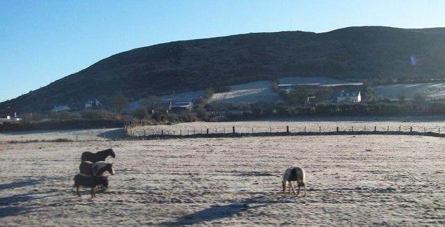 Ponies near Carrickcarnan