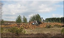 SY9485 : Forestry  Work by Peter Elsdon