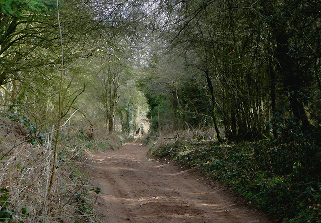 Bridleway in Kingsford Forest Park, Worcestershire