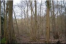 TQ6637 : Woodland near Owl House by N Chadwick