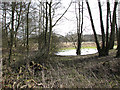 TL9891 : Flooded woodland beside Bradcar Road by Evelyn Simak