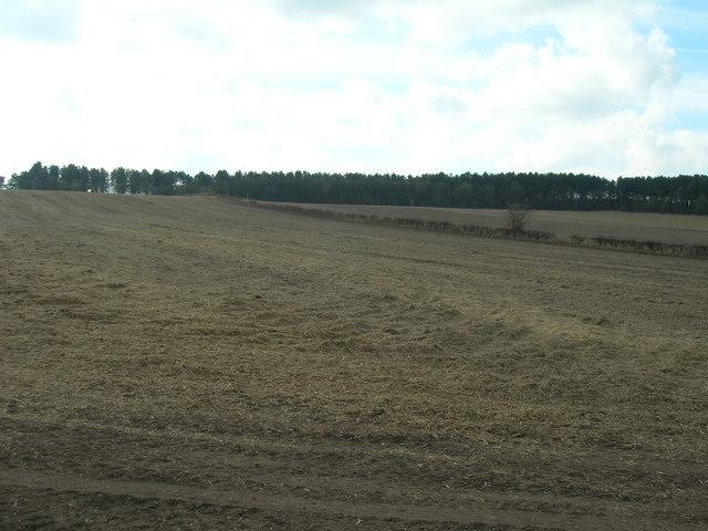 Farmland off Calverton Road