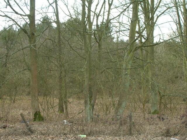 Woodland, Haywood Oaks
