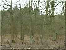 SK6054 : Woodland, Haywood Oaks by JThomas