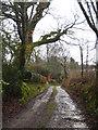 SX3777 : Lane at Trecombe by Rod Allday