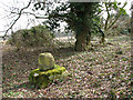 TM0192 : Remains of a medieval stone cross by Whitecross Drift by Evelyn Simak