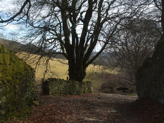 Old tree and stone wall beside an old track