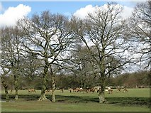 TQ3643 : Deer at the British Wildlife Centre by don cload