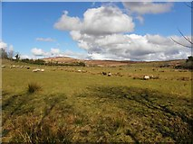 C1303 : Stroanagibbagh Townland by Kenneth  Allen