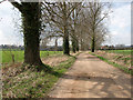 TG2605 : Access road to Bixley Park Farm from the A146 by Evelyn Simak