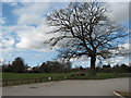 SJ6071 : Car park with ancient oak tree by Dr Duncan Pepper