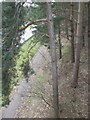 SJ6271 : Footpath beside the A556 Chester road by Dr Duncan Pepper