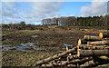 NT9706 : Quarry Plantation by Peter McDermott