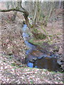 SJ6170 : Down Stream in Petty Pool Woods by Dr Duncan Pepper
