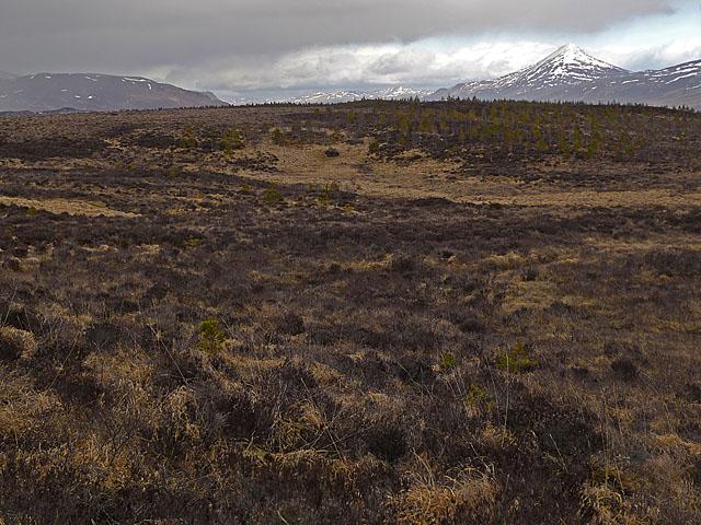 Moorland north of Loch Rannoch