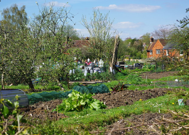 Allotments, St. Cross, Winchester