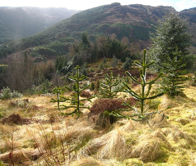 Benmore: a new Chilean forest