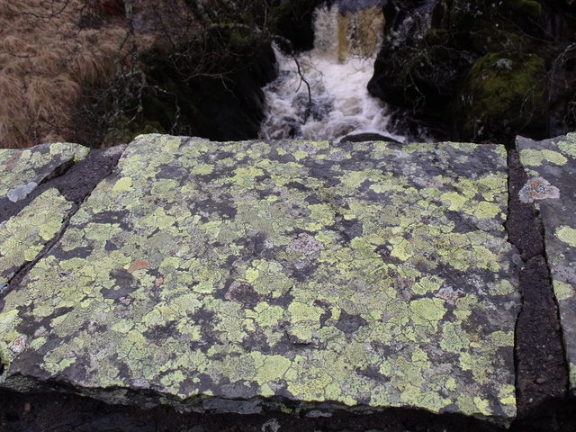 Lichen on bridge
